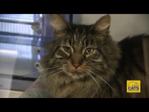 Cats Protection Documentary