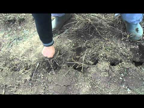 Люцерна (пророщенные семена люцерны). Полезные свойства