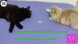 Реакция кошек на лазер #Кошки #Коты #Котята #Прикольные #Веселые #Красивые #Играют