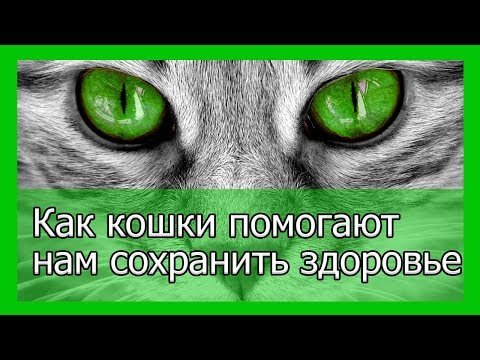Вопрос: Кошачье мурчание способно исцелять?