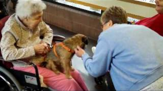 Border Terrier Therapy Dog At Nursing Home
