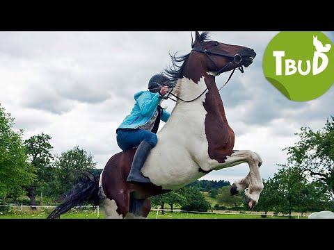 Pferdeflüstern (Folge 71) | Tiere Bis Unters Dach | SWR Kindernetz