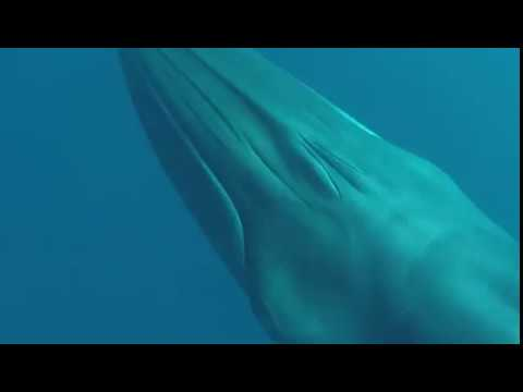 Swimming with whales in Mirissa, Sri Lanka