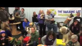 canine circus school oakland california