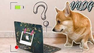 Реакция  собаки НА СВОЙ канал/ мой 1-й Наполеон/ Oculus/ КОРГИ
