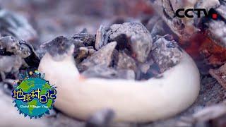 《地球村日记》 20200327 彼得大叔的美食vlog:鄂伦春族烤面圈 CCTV农业