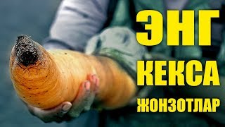 СИЗ БУ ЖОНЗОТЛАРНИ БИЛИШИНГИЗ КЕРАК / ТОП 10 / УЗБЕК ТИЛИДА / QIZIQARLI DUNYO