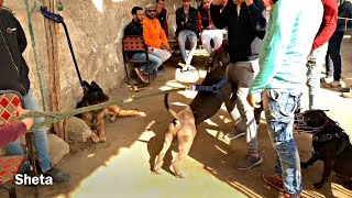 سوق الجمعة سوق السيدة عاءشة مصر القديمة واشرس كلب مع طفل