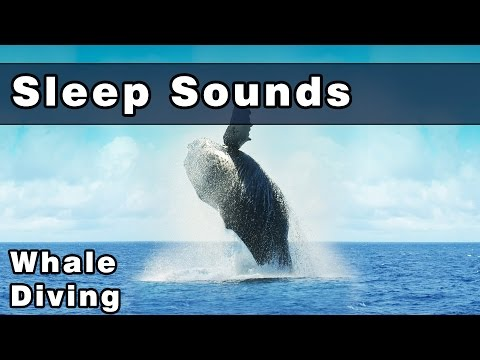 Peaceful Whale Sounds To Sleep To, Water Sounds, Diving With Whales, Ocean Noises, 10 Hours