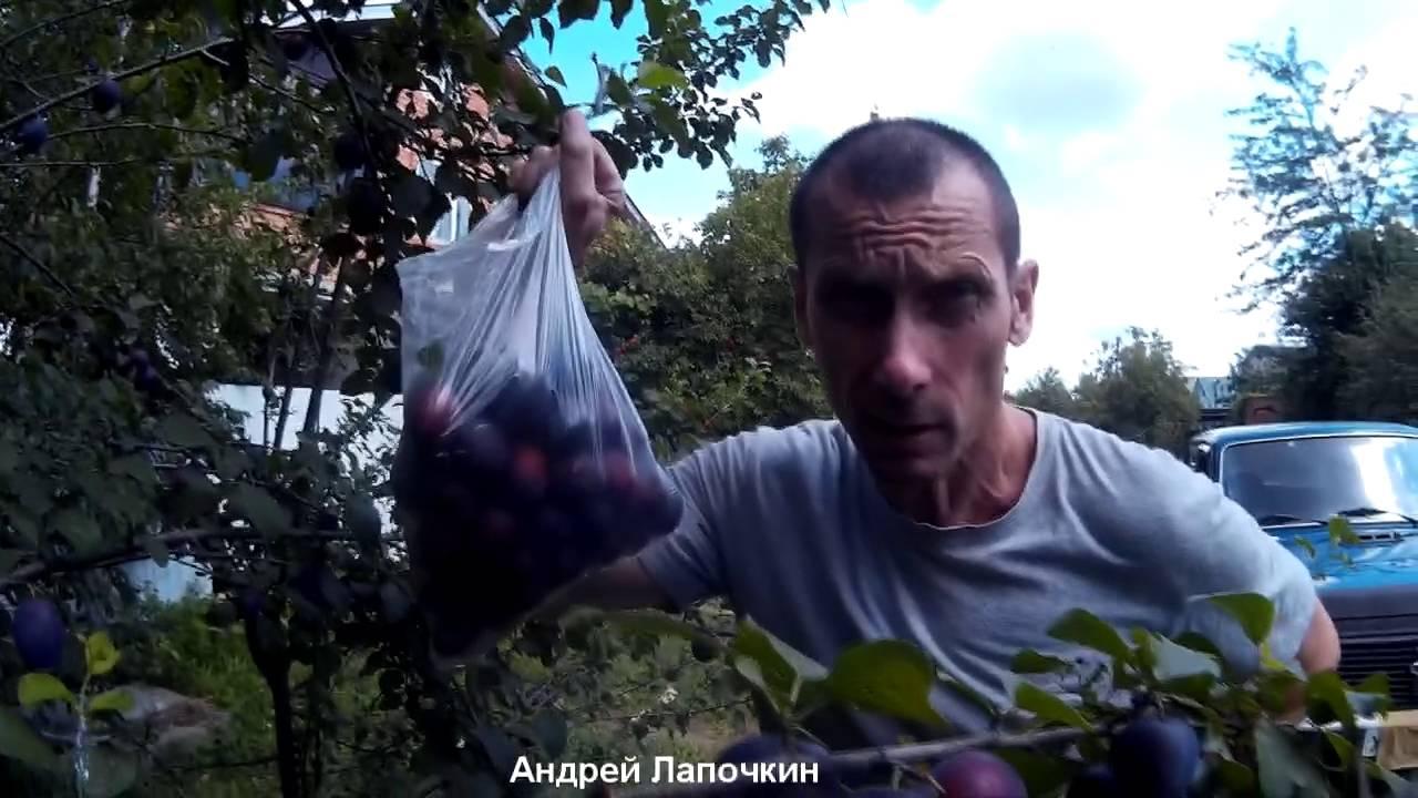 Переезд в Краснодар на ПМЖ. Менталитет, общение. Разведка. Проба .