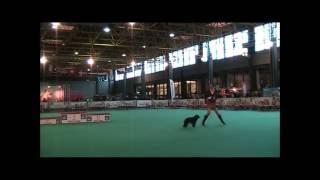 English Cocker Spaniel Nikita & Canine Freestyle (dog Dance)