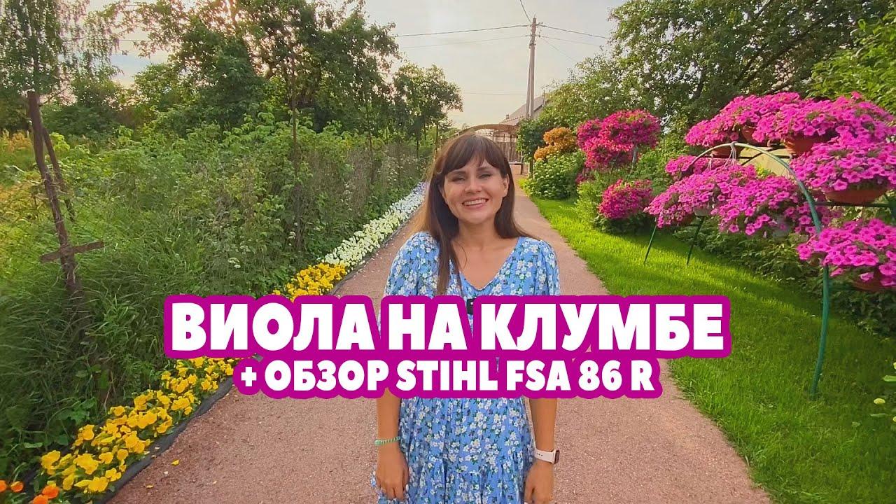 ВИОЛА НА КЛУМБЕ + ОБЗОР STIHL FSA 86 R