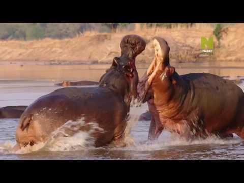 Бескрайняя Африка 1 серия - Долина Луангвы