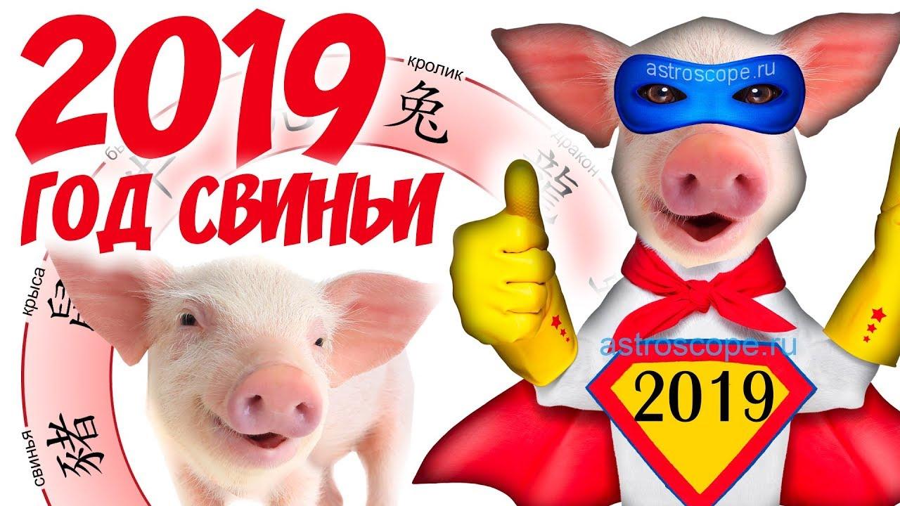 О сайте | 2019 Год кабана новые фото