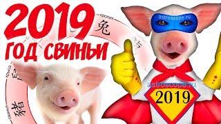 Год Свиньи 2019: китайский гороскоп на 2019 год Свиньи