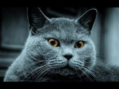Adorable Cats Compilation – Funny Cat Vines #10
