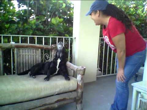 Tamara talks to her dog