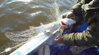 Весенняя рыбалка сетями на реке Амур Щука Карась Удачный улов
