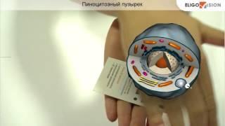 EV Toolbox: Проект 'Строение клетки'