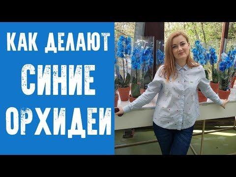 СИНИЕ ОРХИДЕИ. Большой цветочный магазин