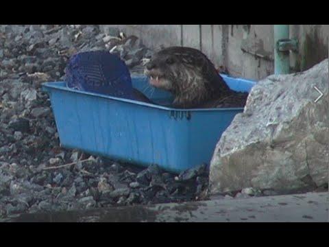 Animales Que Viven En El Refugio (2)