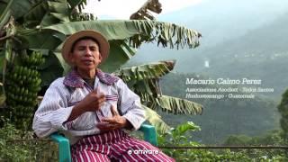 Café y Caffè. I piccoli produttori del Centro America