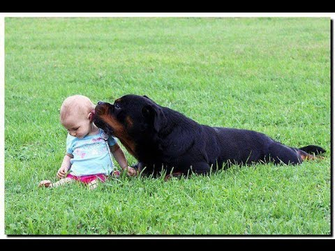 The Most Impressive Rottweiler Pictures of Puppies & Adults (Over 100 photos!!!) MUST WATCH!!!