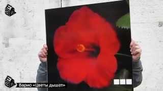 Варио серия «Цветы дышат» Lenticular 3D Poster(3D плитка из ударопрочного стекла для полов и стен Вашего дома и офиса. Укладка можно выполнить из однотипны..., 2014-06-16T23:22:32.000Z)