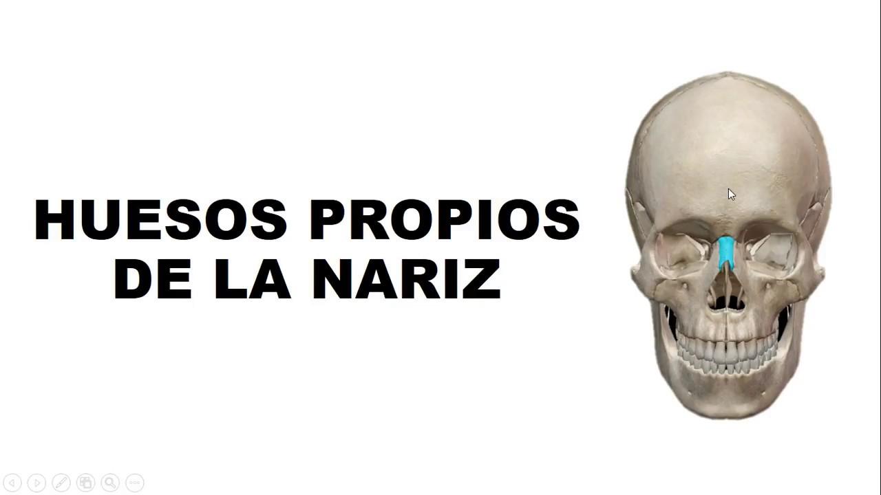 Huesos Propios de la Nariz - Anatomía - YouTube