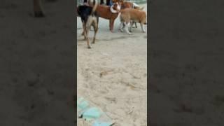 Dog xx X Video