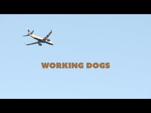 Working Dogs - Full Film