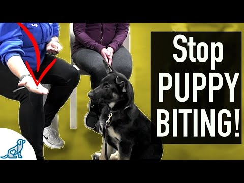 4 SIMPLE Exercises That You Can Do To STOP Puppy Biting