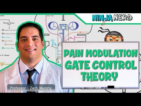 Ascending Tracts | Pain Modulation: Gate Control Theory