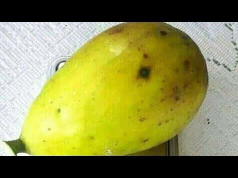 jual-bibit-buah-tin-lonjong-jumbo-wa-085733660033-murah-gratis-ongkos-kirim