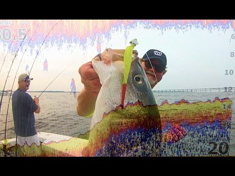 Chesapeake Bay Fish Finder Examples