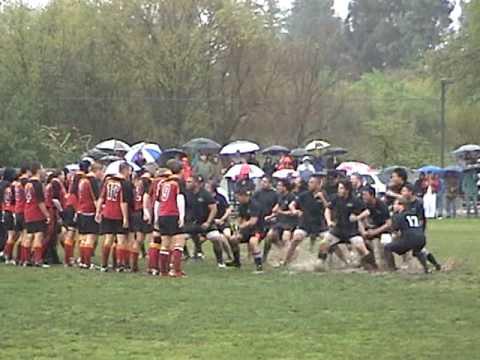 Islanders rugby club Haka