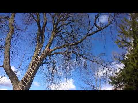Falling tree branch breaks ladder