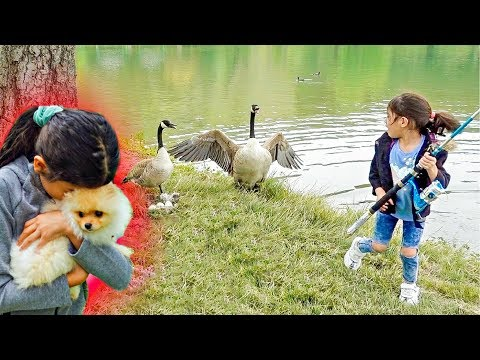 We Can't BELIEVE They GOT ATTACKED By DUCK'S!!! ** SCARY**