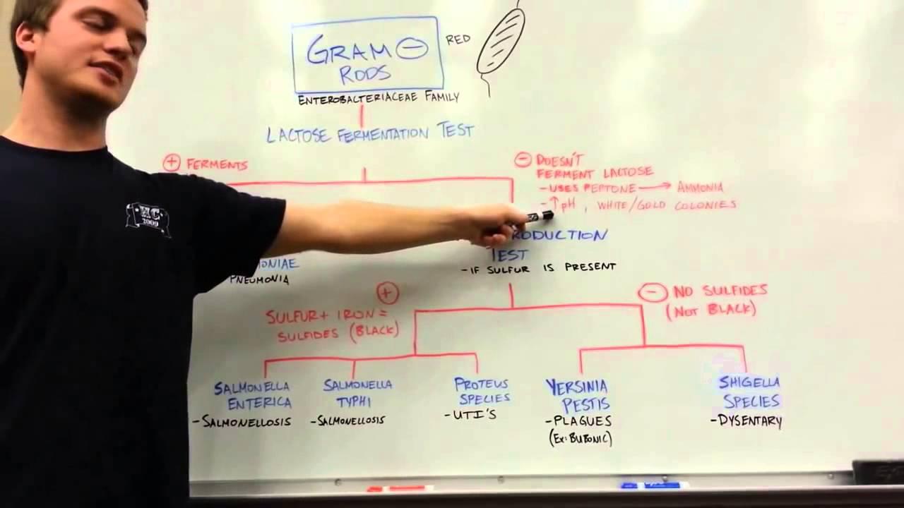 How to distinguish GRAM NEGATIVE RODS