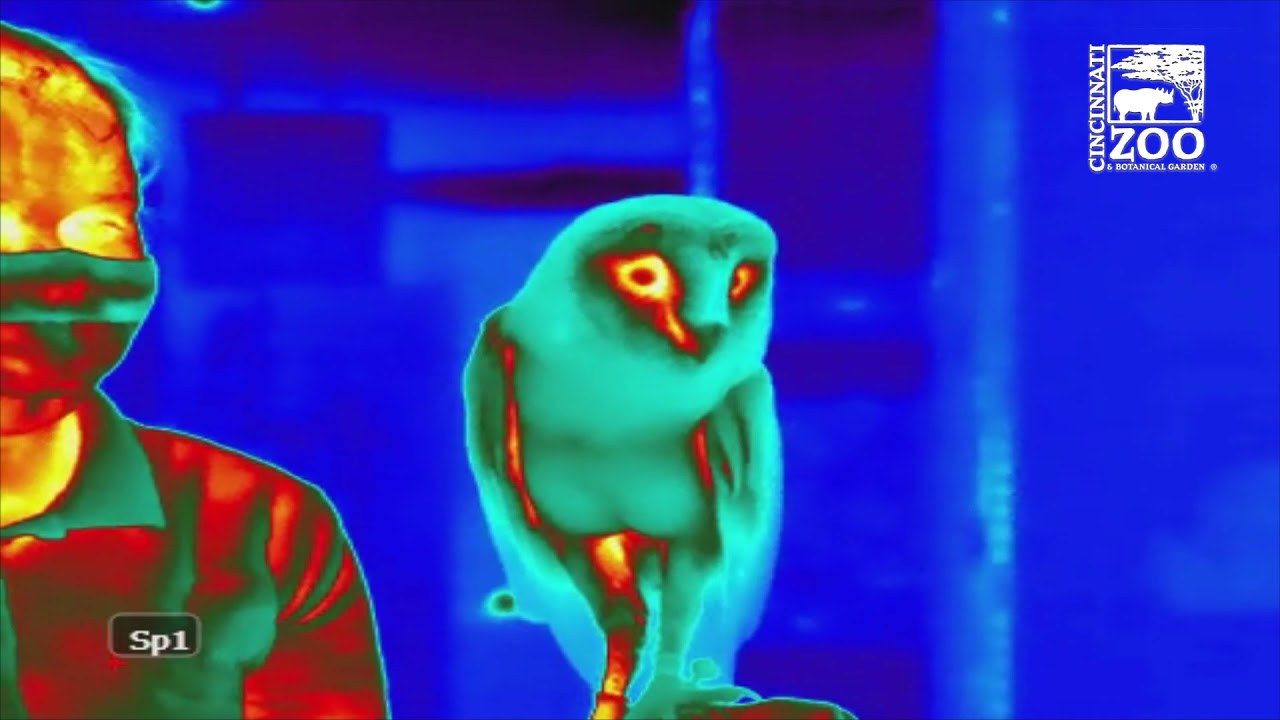 Thermal Image Videos of Animals for Research - Cincinnati Zoo