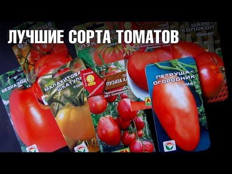 Семена томатов 🍏Лучшие сорта томатов для Подмосковья 🍏 Сад и огород с  hitsadtv