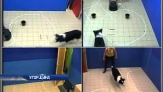 Венгерские ученые выяснили взаимоотношения собак и ...