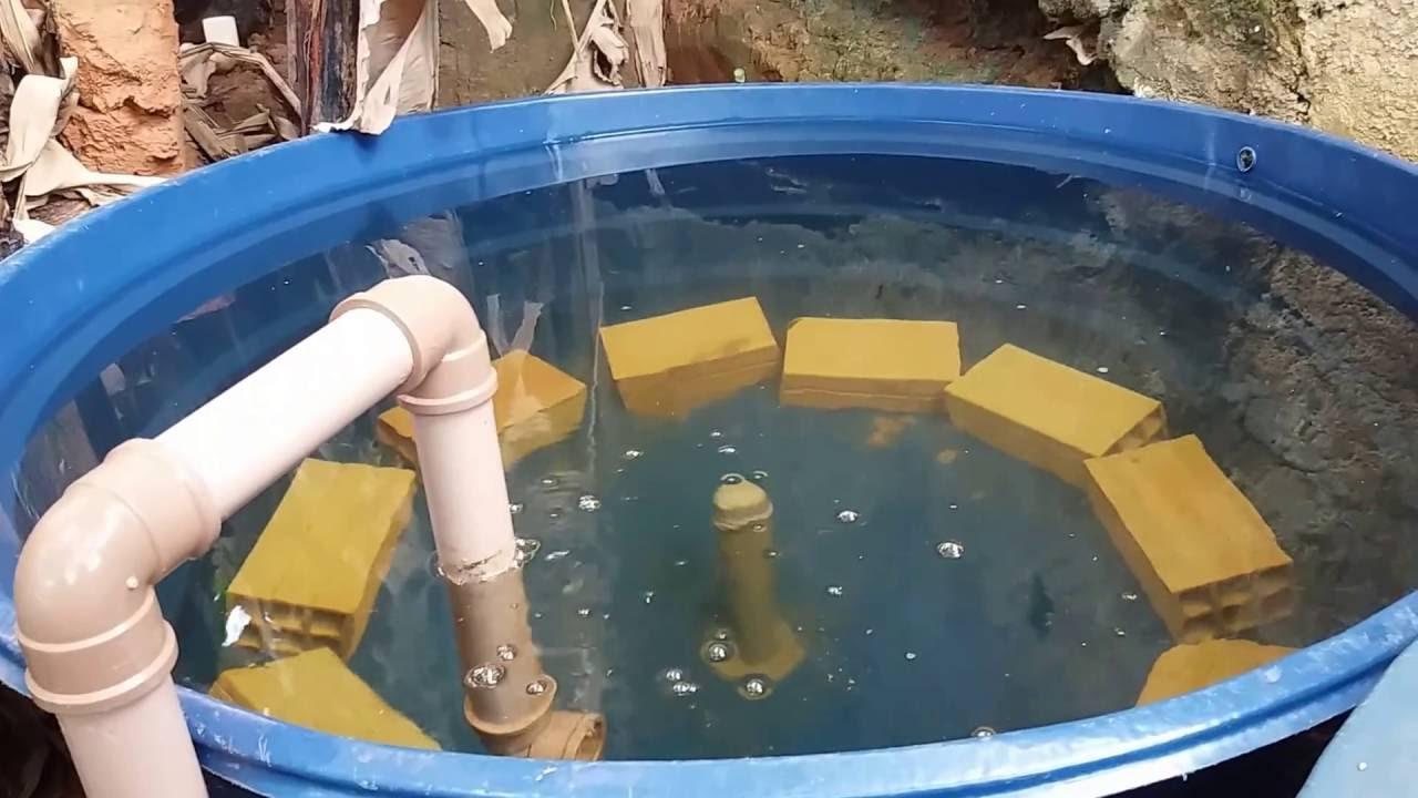 O que fazer antes de colocar os peixes na caixa d gua na for Que se necesita para criar tilapias