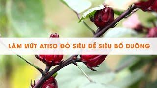 Cách làm mứt Atiso (hoa bụp giấm) cực ngon đơn giản tại nhà