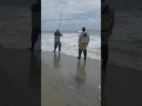 Ocracoke Surf Fishing Red Drum November 2018