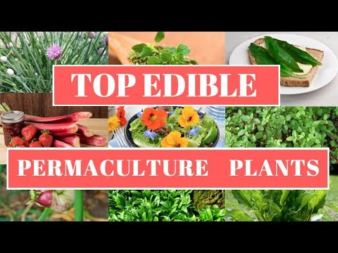Top Edible Permaculture Plants List   Permaculture Design Principles   Starting an Orchard Part 2