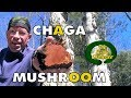 Chaga Tinder Fungus Anti-oxidants - Tips On How To Prepare