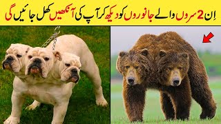 In Do Saro Wale Janwaro Ko Dekh Kr Aap Ki Aankhain Khul Jain Gi || Top 2 Headed Animal In The World