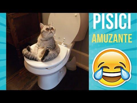 Pisici Nebune! Filme Amuzante Cu Pisici.Încearca Sa Nu Rîzi!!!