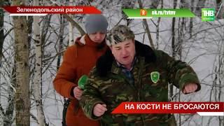 Участились случаи нападения одичавших собак на лесных животных - ТНВ